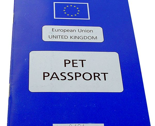 Travel to the UK for cats and dogs