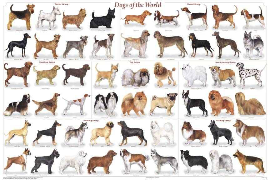 Popular dog breeds 1 sat animal rescue for Types of dogs with photos